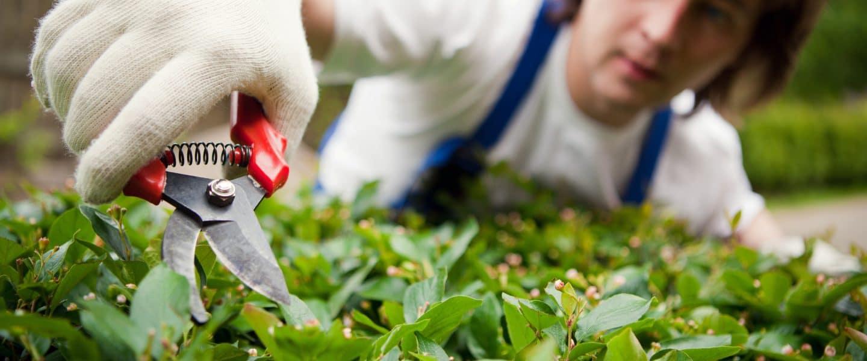 vacature vacatures groenvoorziening tuinieren hovenier attract uitzendbureau